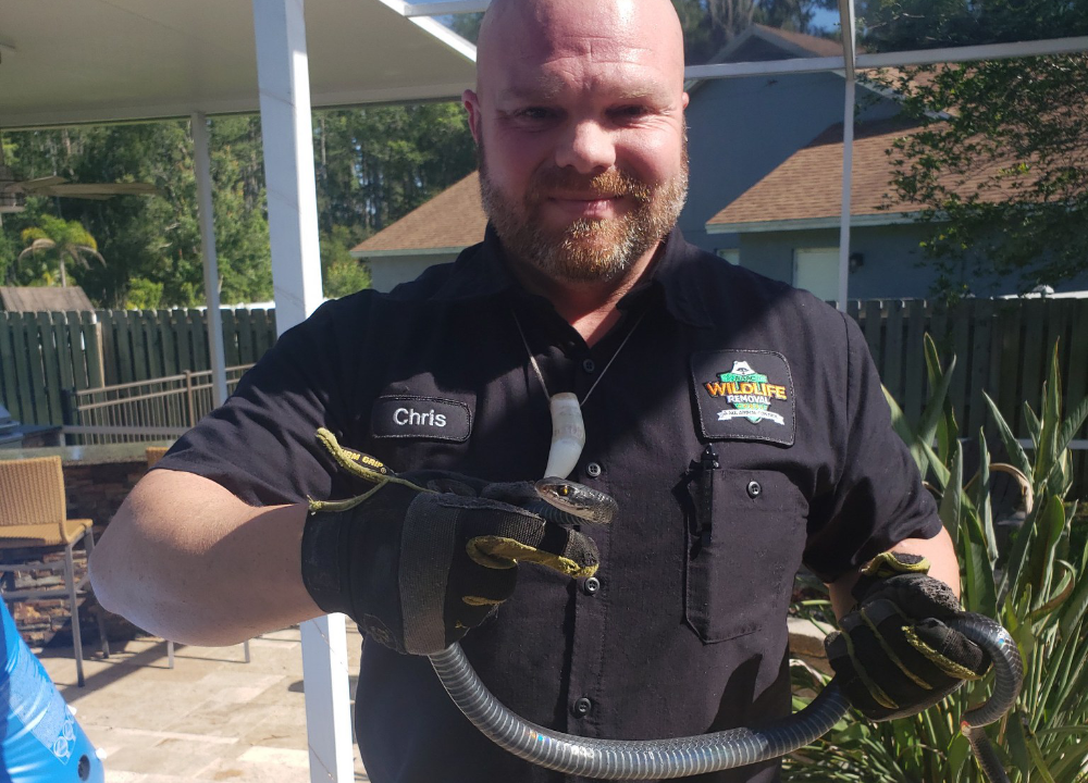 Chris holding a southern black racer